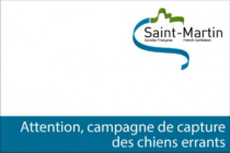 Saint-Martin : Capture de chiens errants du 1er au 16 juin 2015