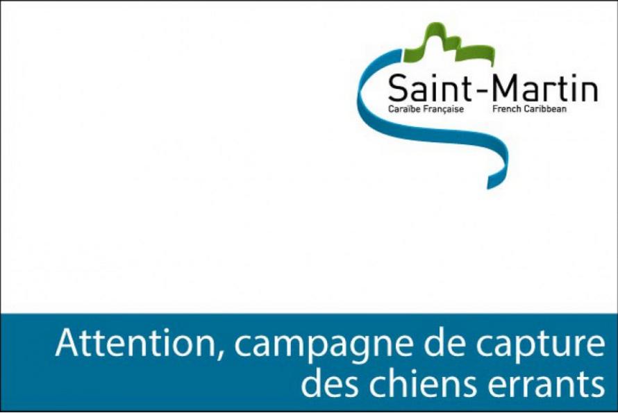 Saint-Martin : Capture de chiens errants du 1er au 16 juin 2015