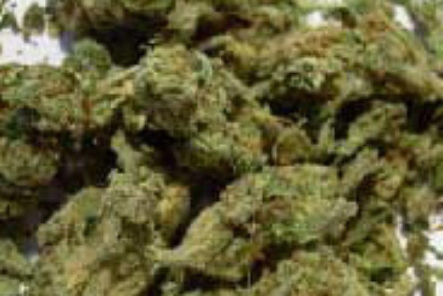 Renforcement de la lutte anti-drogue par la gendarmerie
