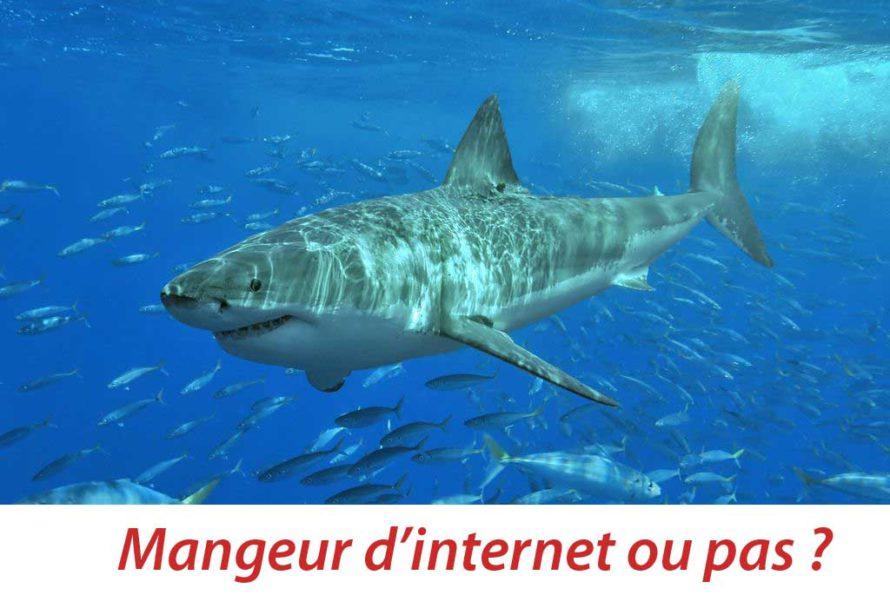 Internet : Quand Google affirme que les requins deviennent une menace
