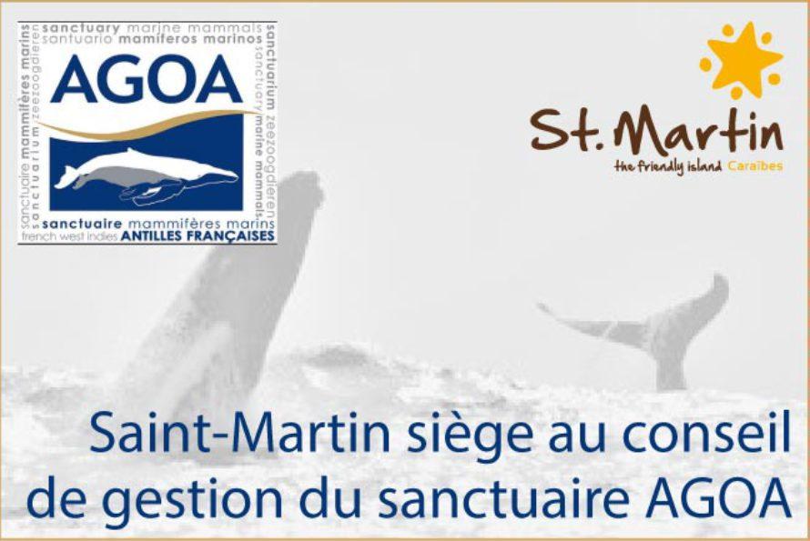 Environnement – Saint-Martin siège au conseil de gestion du sanctuaire AGOA