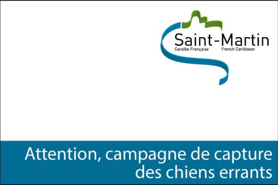 Collectivité de Saint-Martin : Capture de chiens errants du 28 novembre au 13 décembre 2016