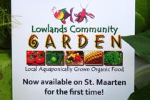 Lowlands Community Garden – Your Community Garden Needs Your Help !
