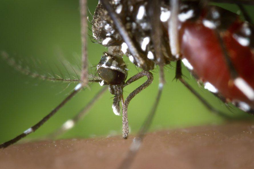 Premier cas de femme enceinte atteinte du Zika en Europe