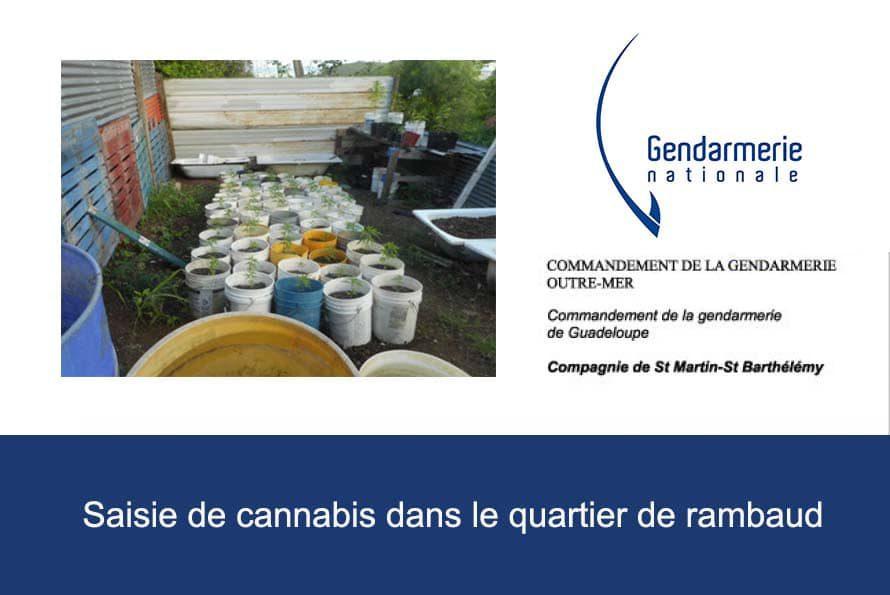 Gendarmerie : 121 pieds de cannabis, 234 gr de feuilles de cannabis séché ainsi que 277 gr de tête découvert dans le quartier de rambaud